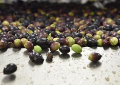 Processus de fabrication de l'huile d'olives